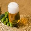 Изготовление домашнего пива из порошка